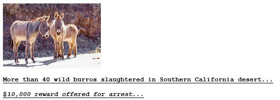 Clark Mountain Burros on Drudge-1