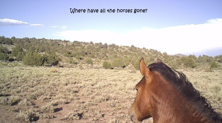 Where Did All the Horses Go-1