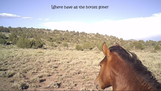 Where Have All the Horses Gone-1