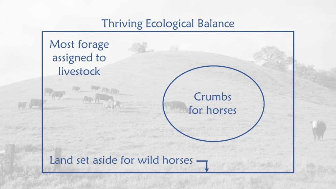 Thriving Ecological Balance