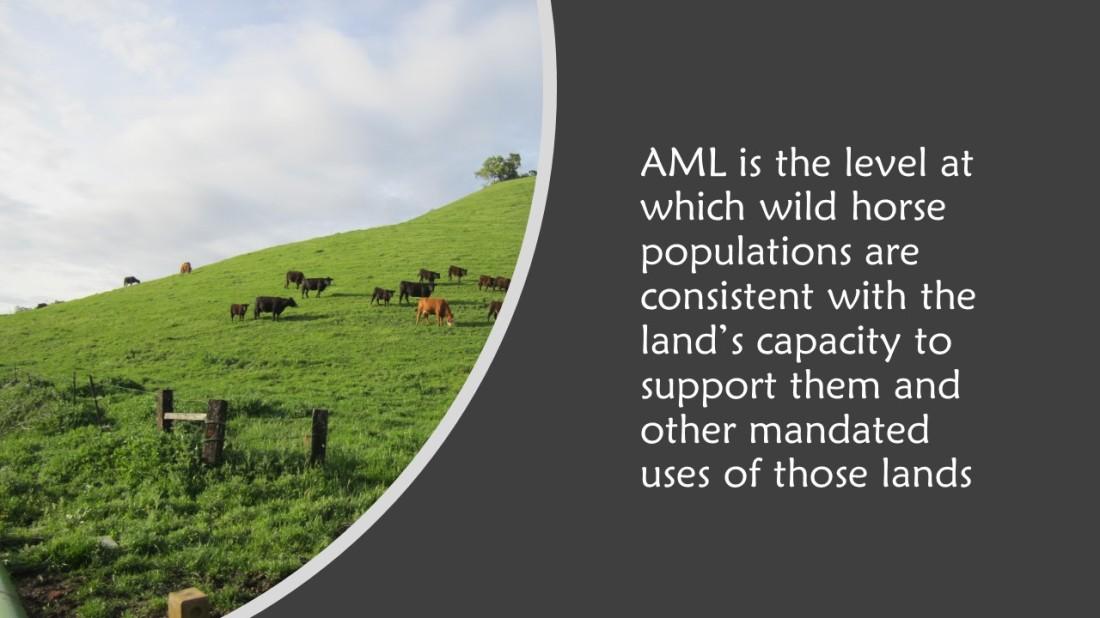 AML-1