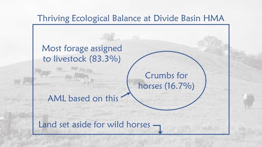 Divide Basin Thriving Ecological Balance-1