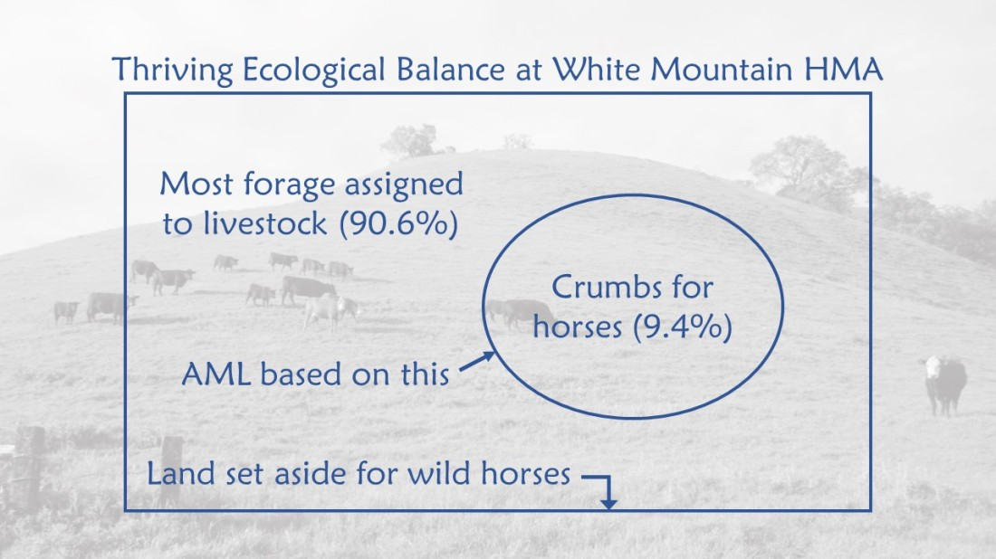 White Mountain Thriving Ecological Balance