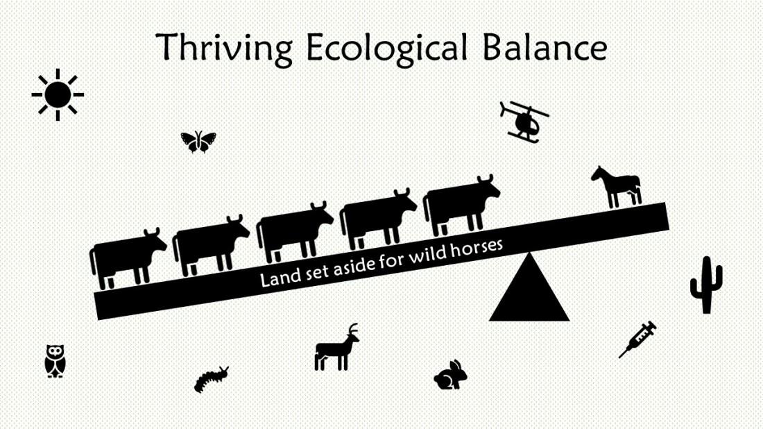 Thriving Ecological Balance-3