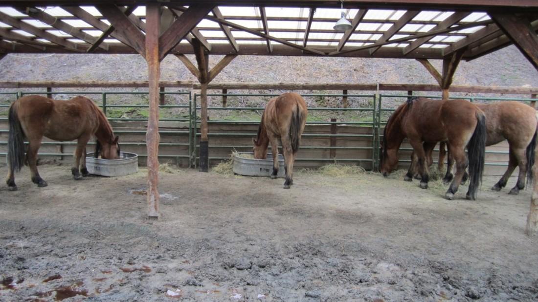 Reducing Hay Losses in Winter 01-10-21